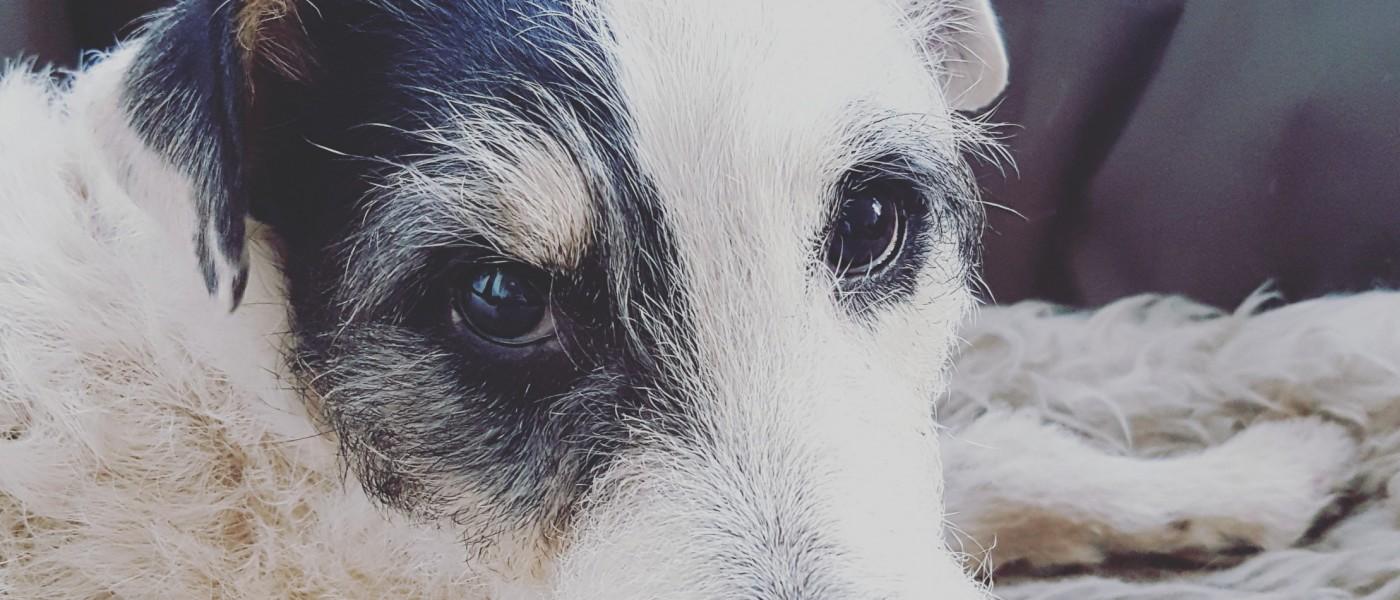 Eine Texterin und der frechste Terrier der Welt.