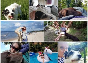 Collage: Texterin und Hunde
