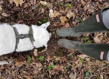 Hund mit Kopf im Erdloch - daneben ein paar Gummistiefel