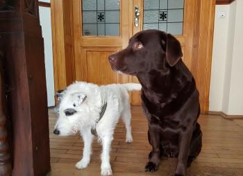 zwei Hunde im Treppenhaus - wartend